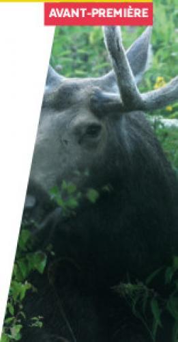 Alpes mancelles activités présente : Dans les bois au cinéma de Fresnay-sur-Sarthe