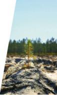 Alpes mancelles activités présente : Le Temps des forêts au cinéma de Fresnay-sur-Sarthe